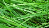 Как вывести пятно от травы и цветов